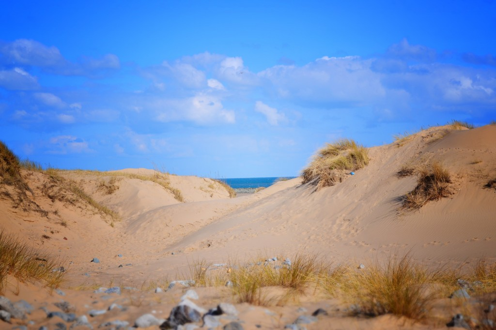 Sand dunes South Gare