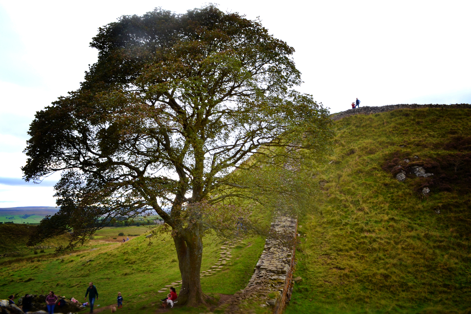 Visitors at Sycamore Gap